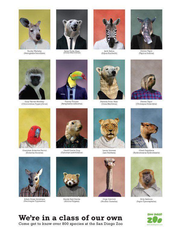 San Diego Zoo Yearbook Design Idea 19 Http://hative.com/beautiful