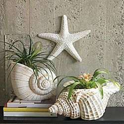 Ocean Decor Sea Shell Decor Betterimprovement Com
