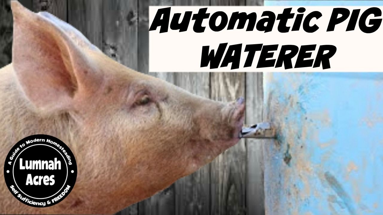 How we set up our automatic pig waterer with a pig nipple drinker. Using a food grade 55 gallon drum and a nipple. Here is the link for the nipples.
