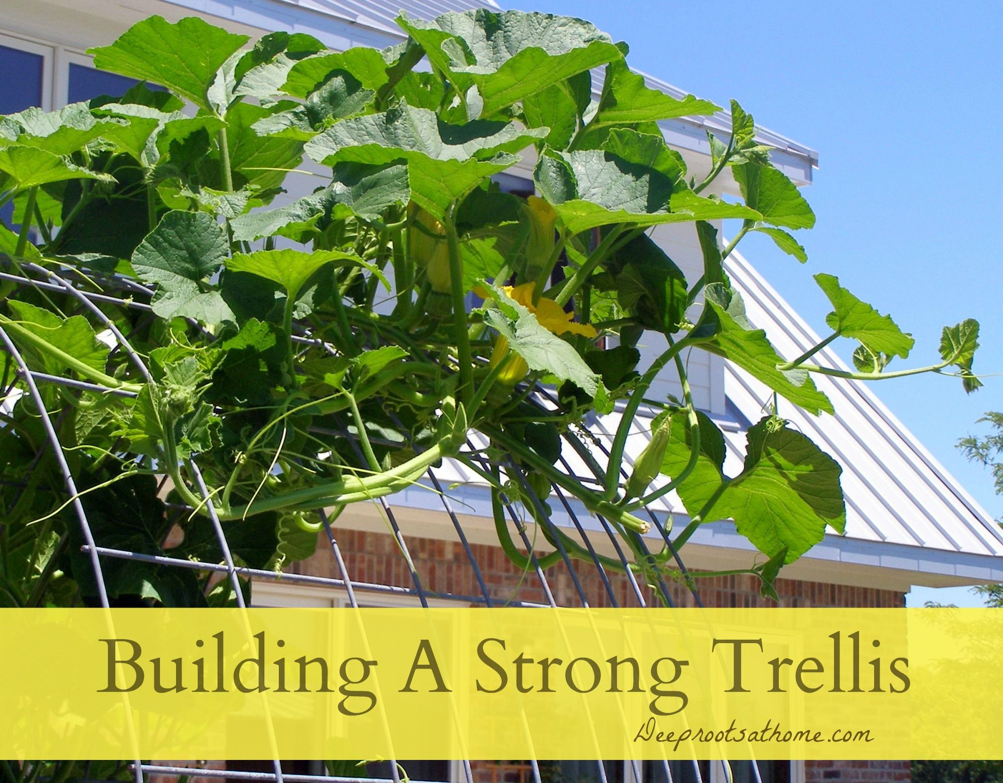 Trellis Planting Ideas Part - 33: Building A Strong Trellis, Grow Cantaloupes, Melons, Squash, Gourds,  Climbers,