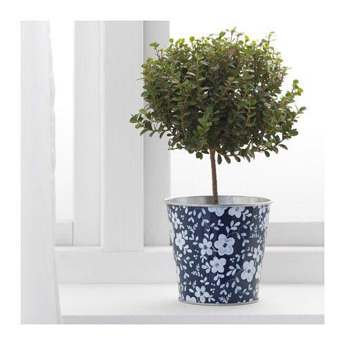 Ikea Us Furniture And Home Furnishings Plants Steel Flowers Planting Flowers