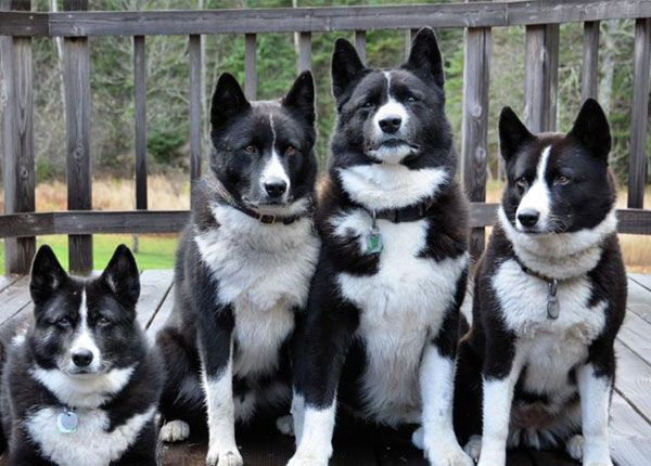 Top 10 Unique Rare Dog Breeds That You May Never Come Across You might have seen many dogs of different breeds. But the ones listed here are very rare and not usual. Some may have familiarity with the breed you…