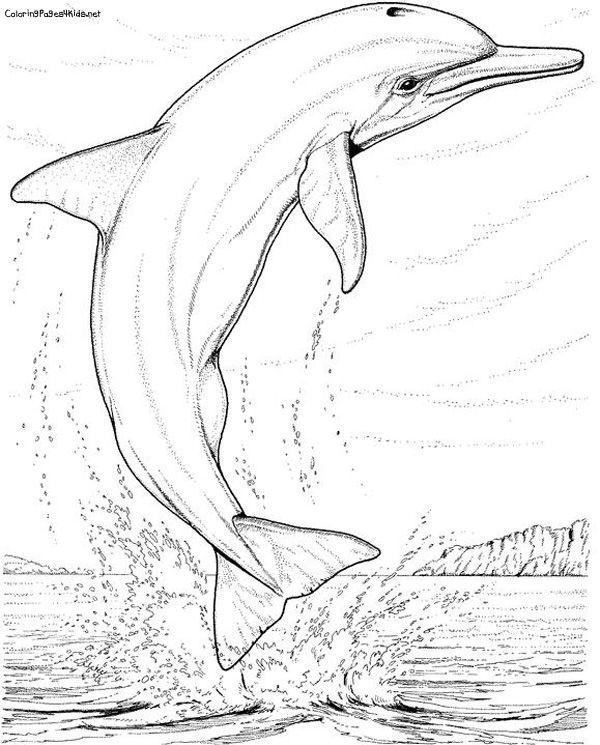 Dolphin | Children | Pinterest | Malbücher, Applikationen und Wasser