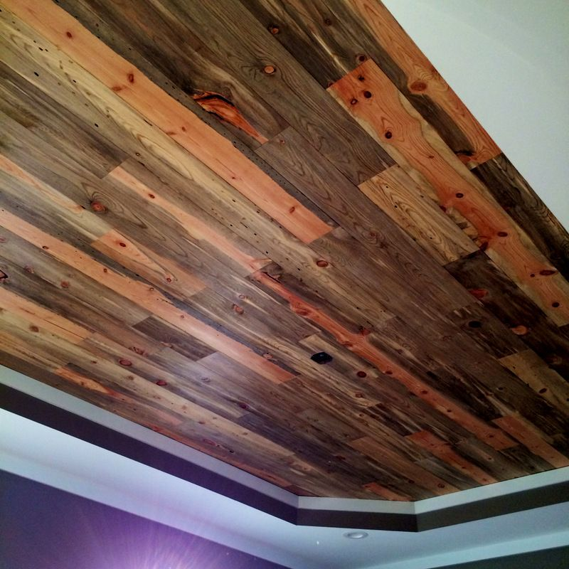 Accent Wall With Blue Stain Pine: Beetle Kill Pine Lumber For Walls & Floors