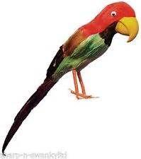 Herren Damen Feder Papagei Vogel Piraten Kostüm Kleid Outfit ...