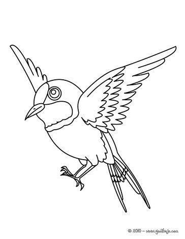 Dibujo Para Colorear Un Gorrion Paginas Para Colorear Dibujos De Aves Dibujos