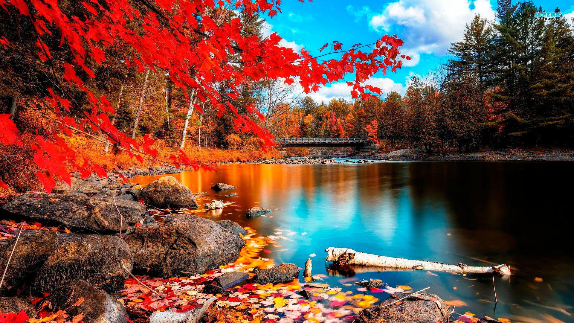 Обои осень. Природа foto 12