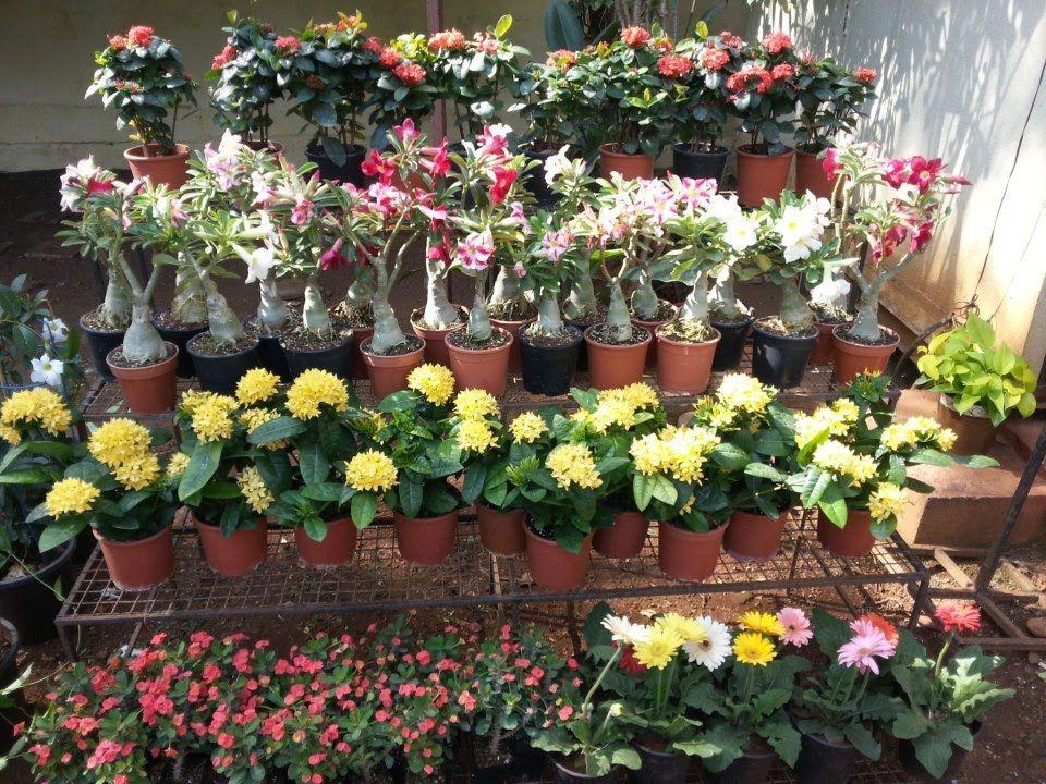 Nursery Plants Online