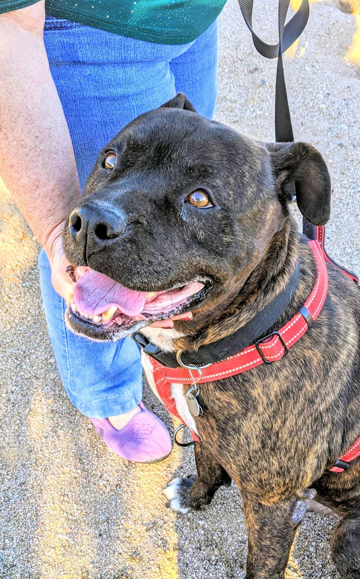 Adopt BAXTER on Dog love, Smiling dogs, Pets