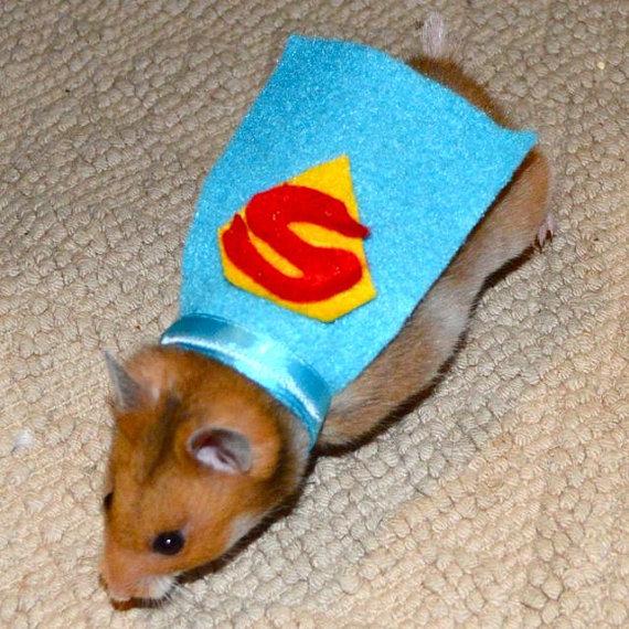 Image result for Pet Games Online- Dress A Hamster