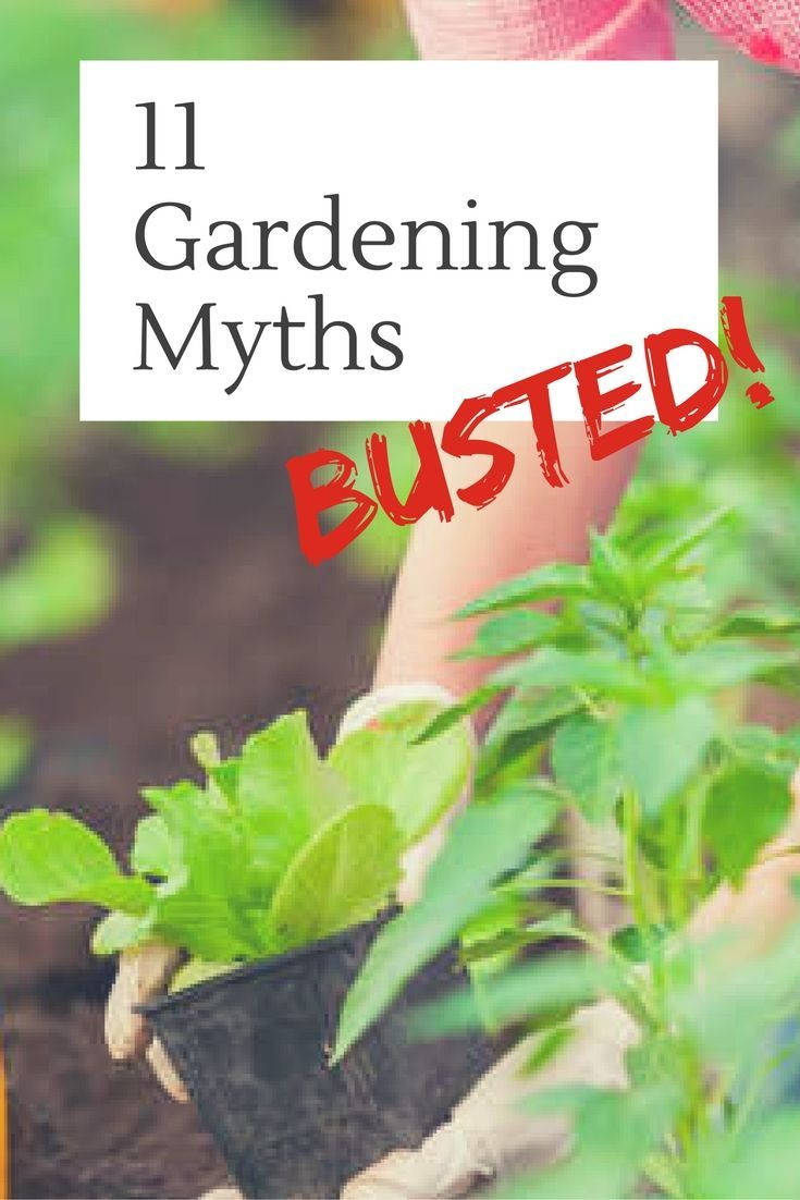 Gardening Advice Is Not Always Based On Science Or Experience. There Are A  Lot Of