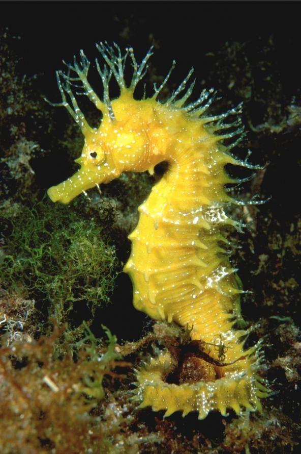 Terramarproject Beautiful Sea Creatures Sea Animals Seahorse