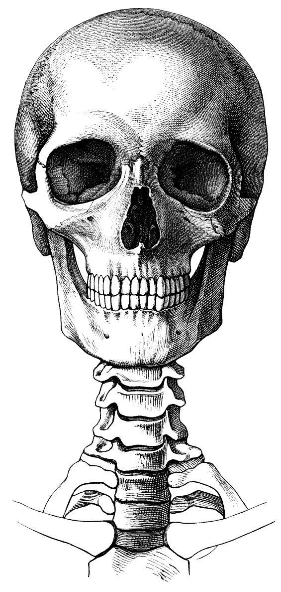 crane | Anatomía, Radiología y Calaveras
