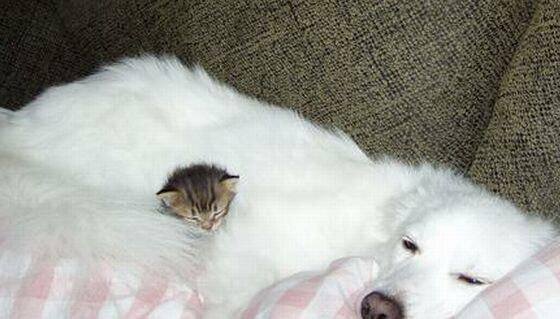 かわいすぎる猫と犬の仲良し画像 01 ねこLatte+