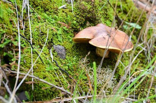 Mushroom & Green Moss