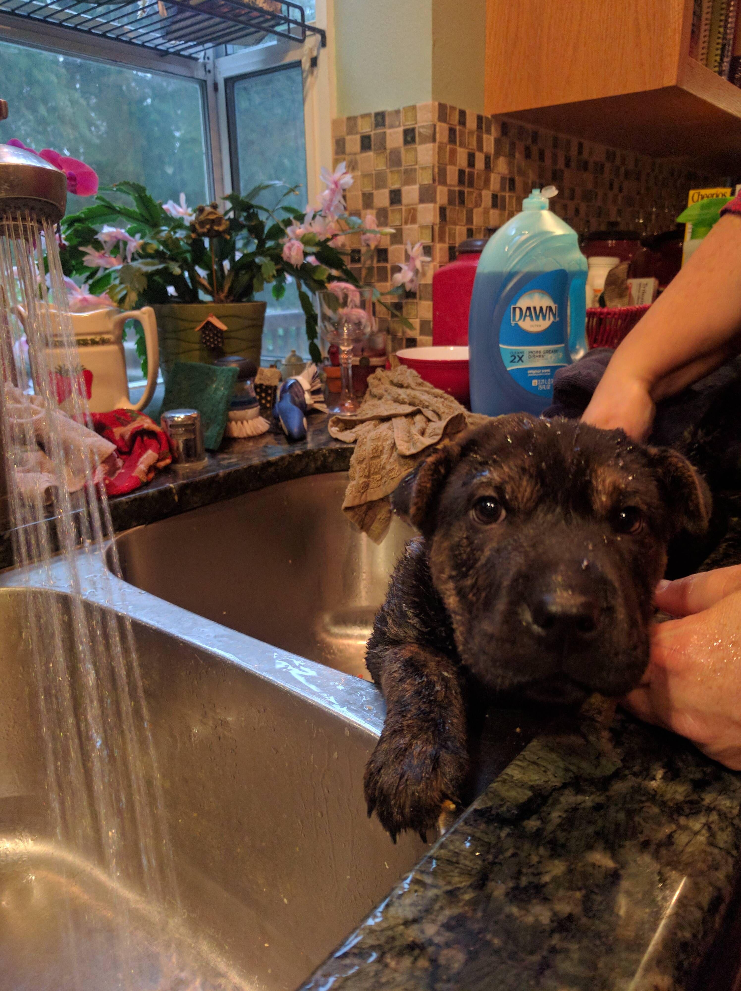 First bath! http://ift.tt/2evrfCF