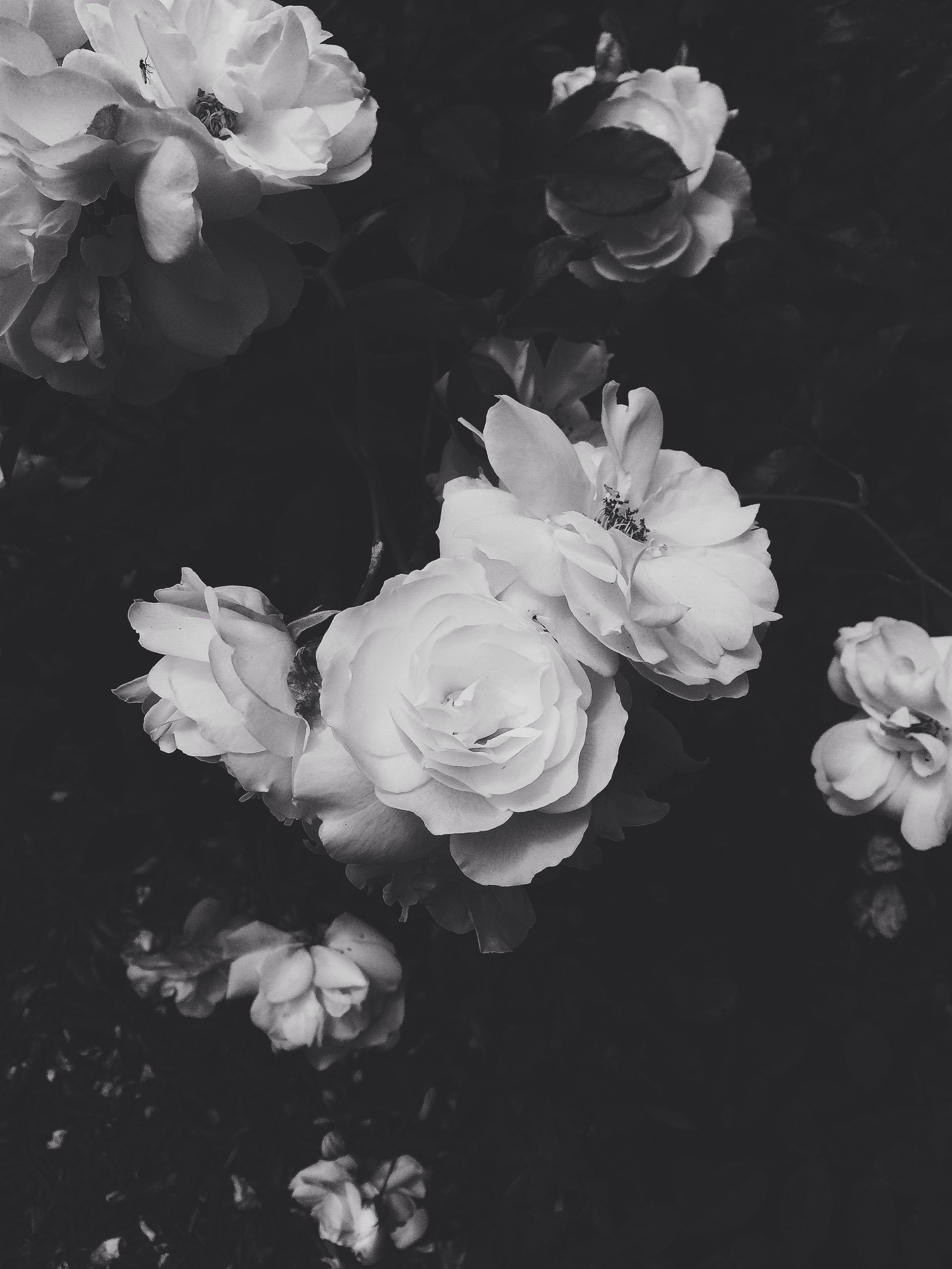 Pin By Heather Buzzelli On Black And White Black Background Wallpaper Black Aesthetic Wallpaper Dark Wallpaper
