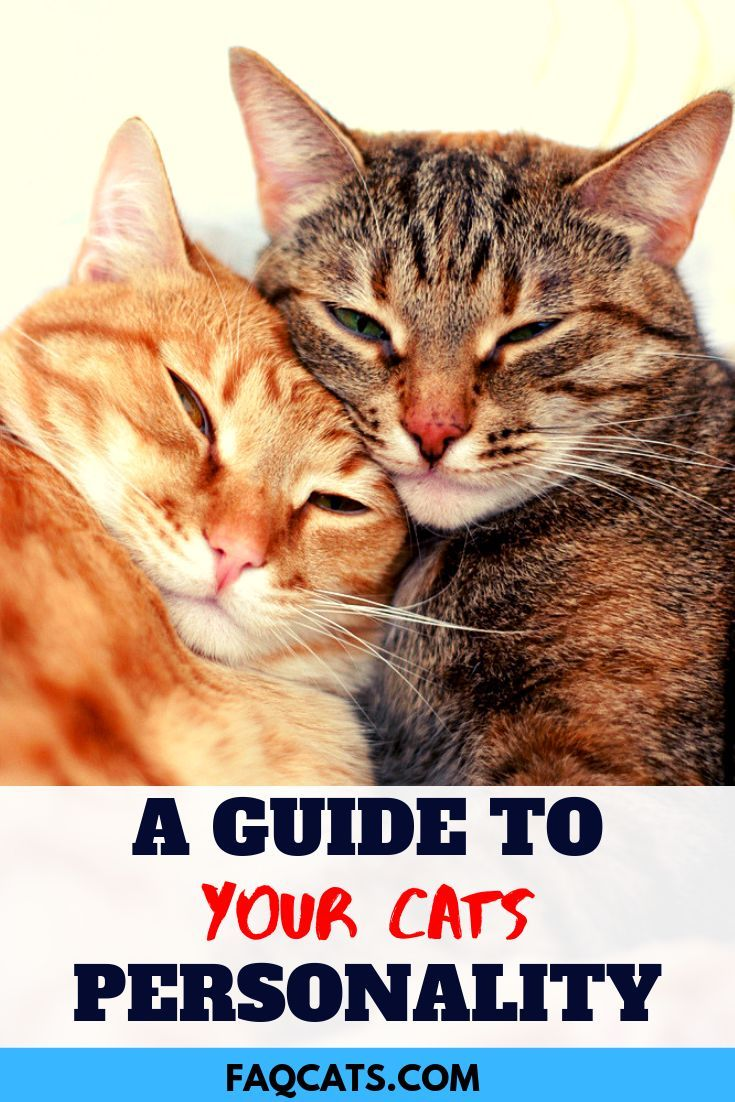 Cats can be adorable, loving, funny, playful and smart
