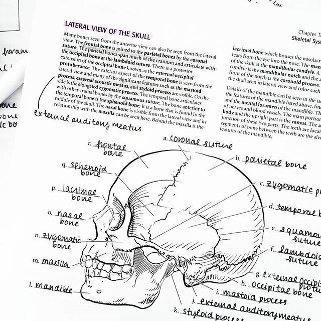 I found this helpful coloring/labelling PDF for anatomy