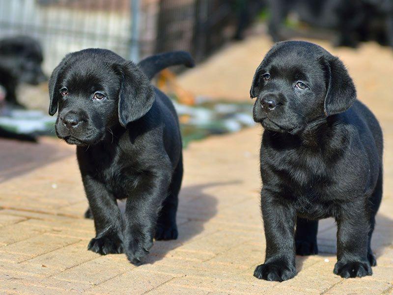 Labrador Bambini ~ Semplicemente i cani più belli del mondo. moda pinterest