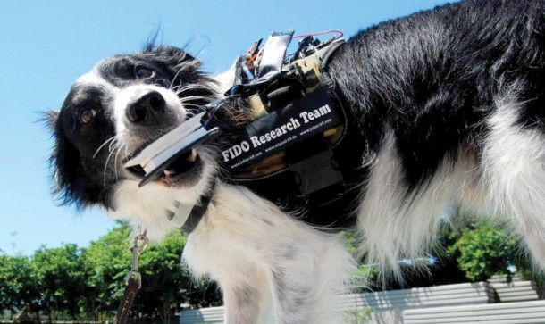 Los perros también gozarán de las nuevas tecnologías