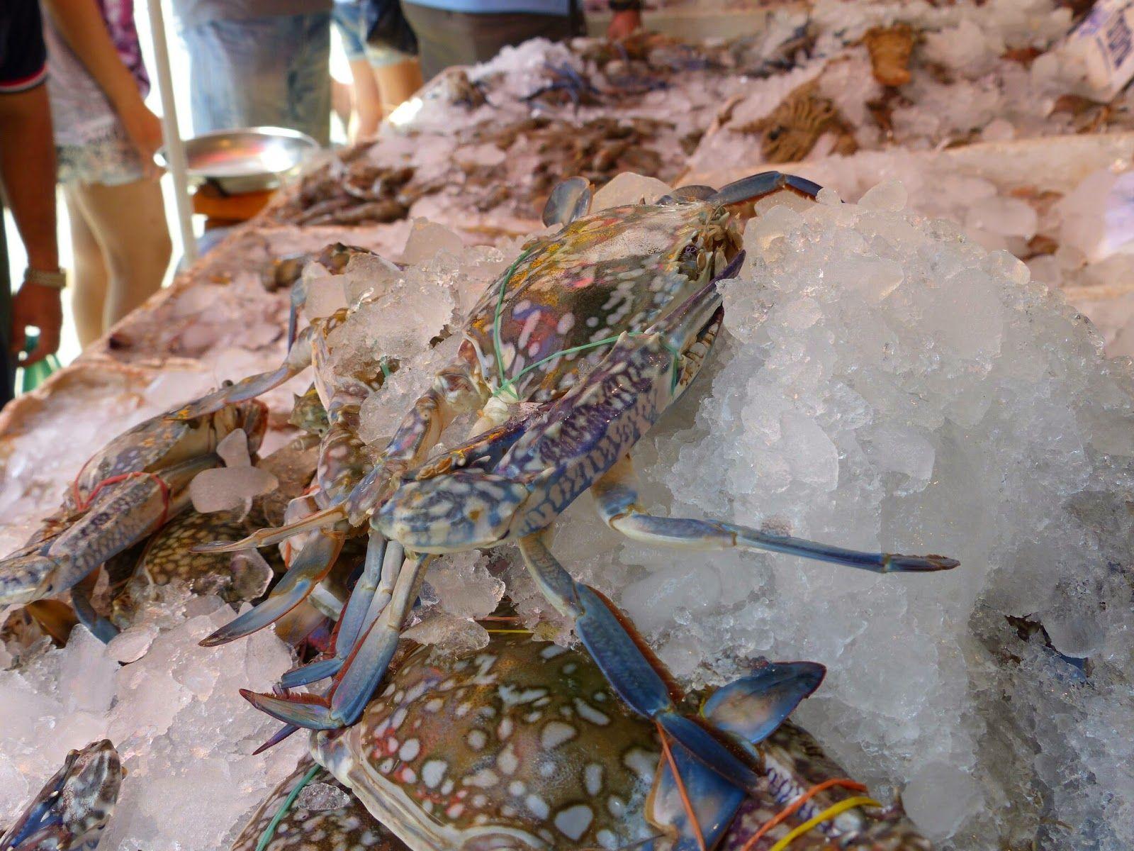 Thailand Explorer: Ban Phe Fresh Fish Market