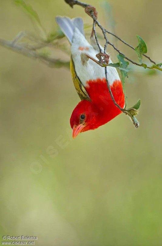 Flying Jewels God S Awesome Gorgeous Creation Beautiful Birds Pretty Birds Most Beautiful Birds