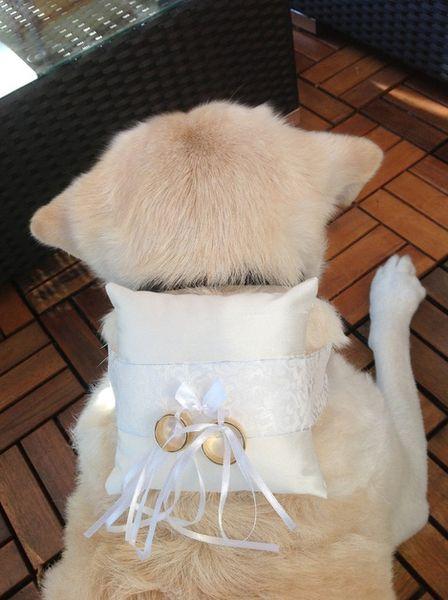 Ringkissen Fur Hunde Hochzeit Von Ringkissen Shop Auf Dawanda