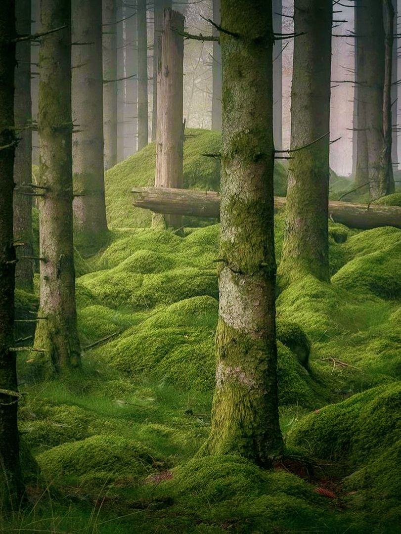 Forest Nature Moss Photography Woods Photography Forest Photography Forest