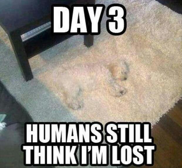 Dog Blends Into Area Rug Funny Animal Jokes Funny Animal Memes Animal Jokes