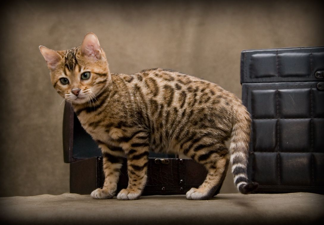 one day i will own one of these CATS Pinterest