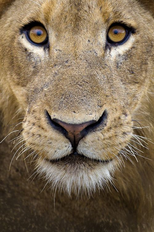 Wonderous-world: Lion Eyes By Mario Moreno