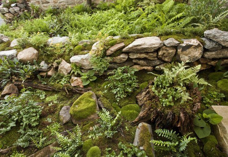 Moss Rock Garden Design Moss Garden Growing Moss Landscaping With Rocks