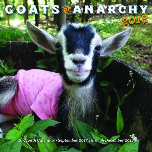 Yay Goats Of Anarchy 2018 16 Month Calendar Sept 2017 Dec 2018 Goats Goats Funny 16 Month Calendar