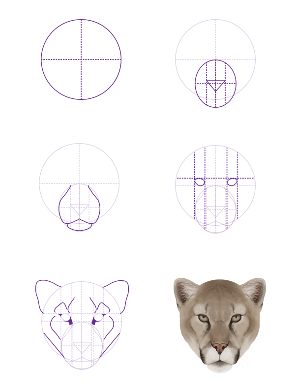 In our first tutorial we looked at drawing lions tigers - Comment dessiner un lynx ...