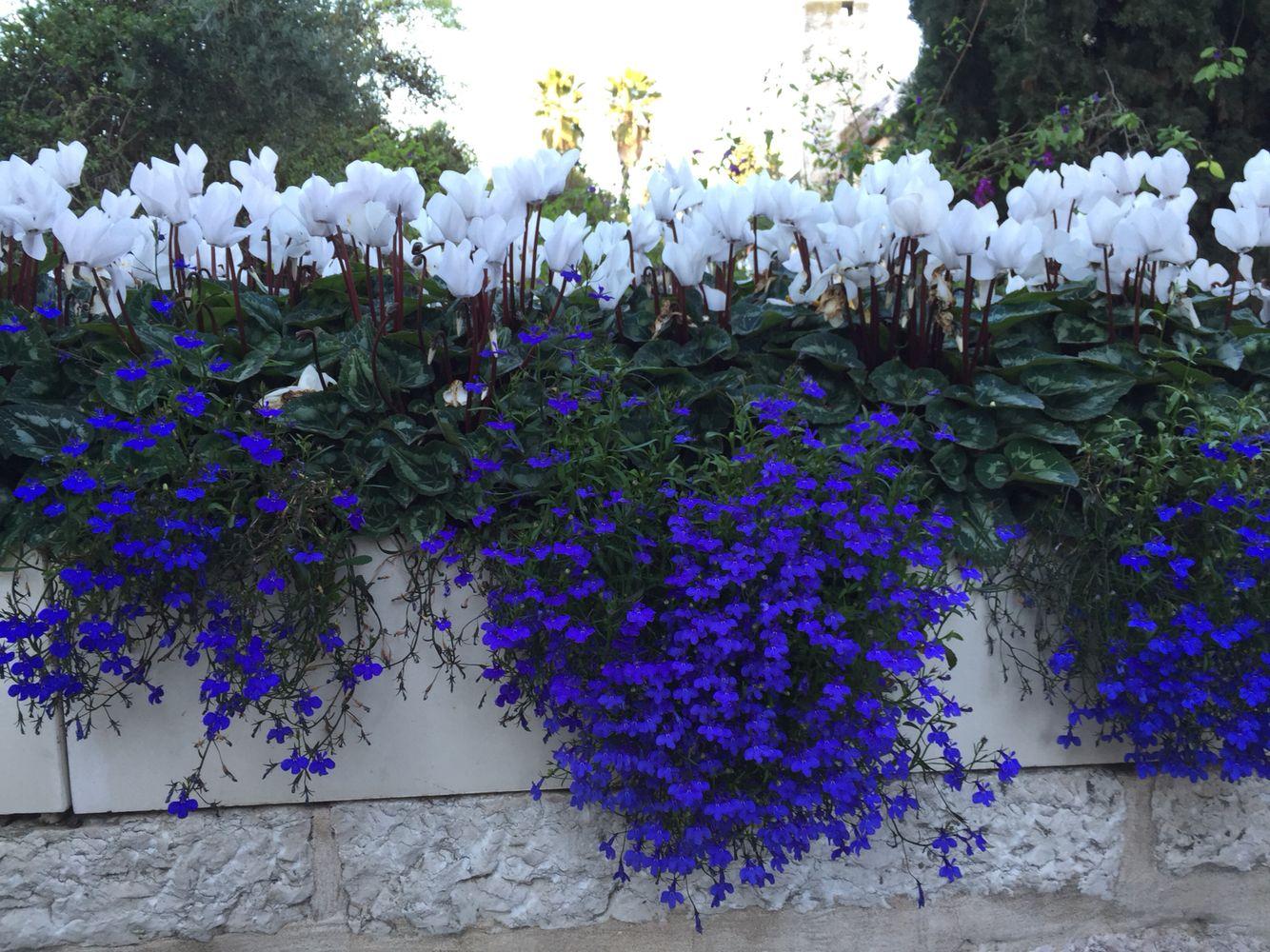 Jerusalem Flowers Garden Fiori