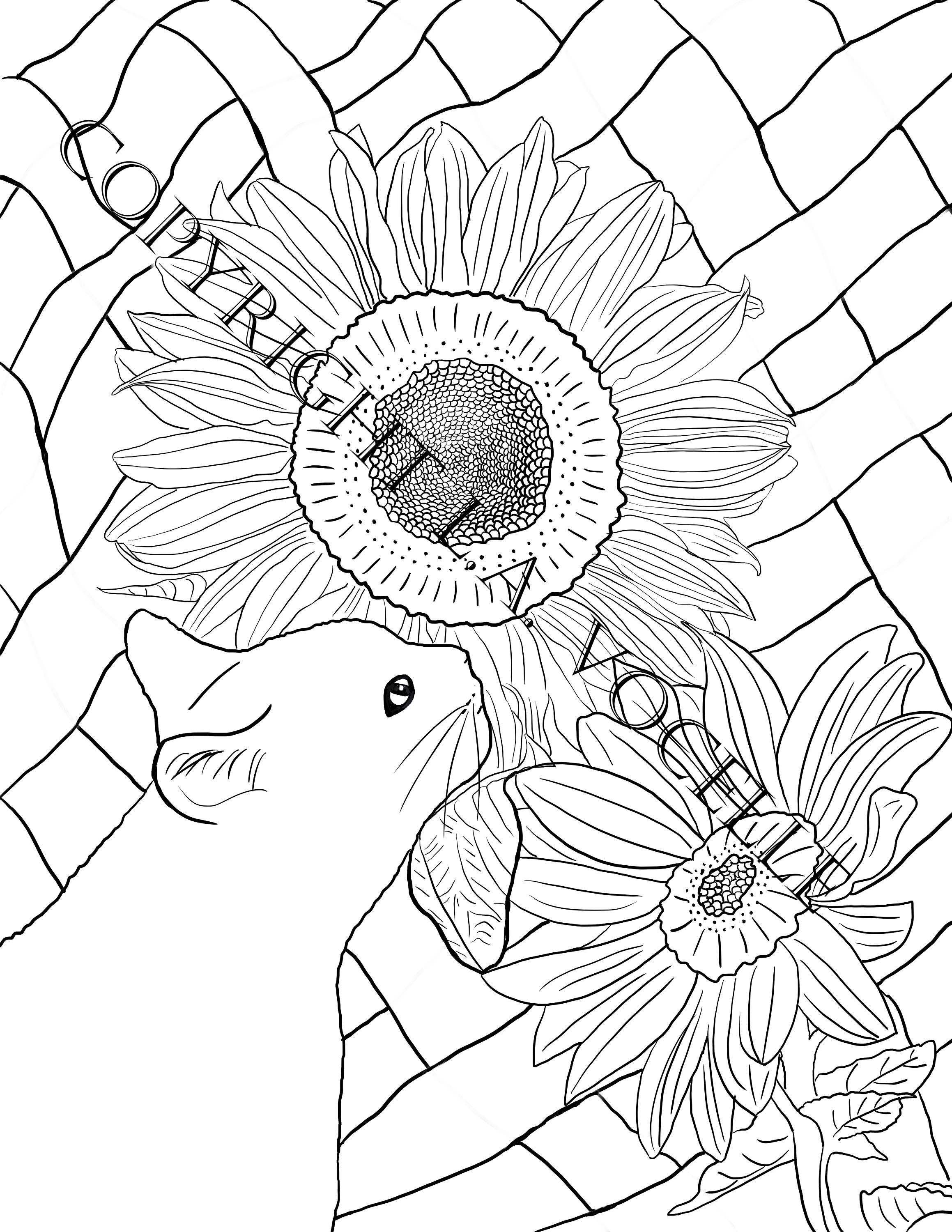 Coloring Pages Books For Adults Cat Kitty Digital Download