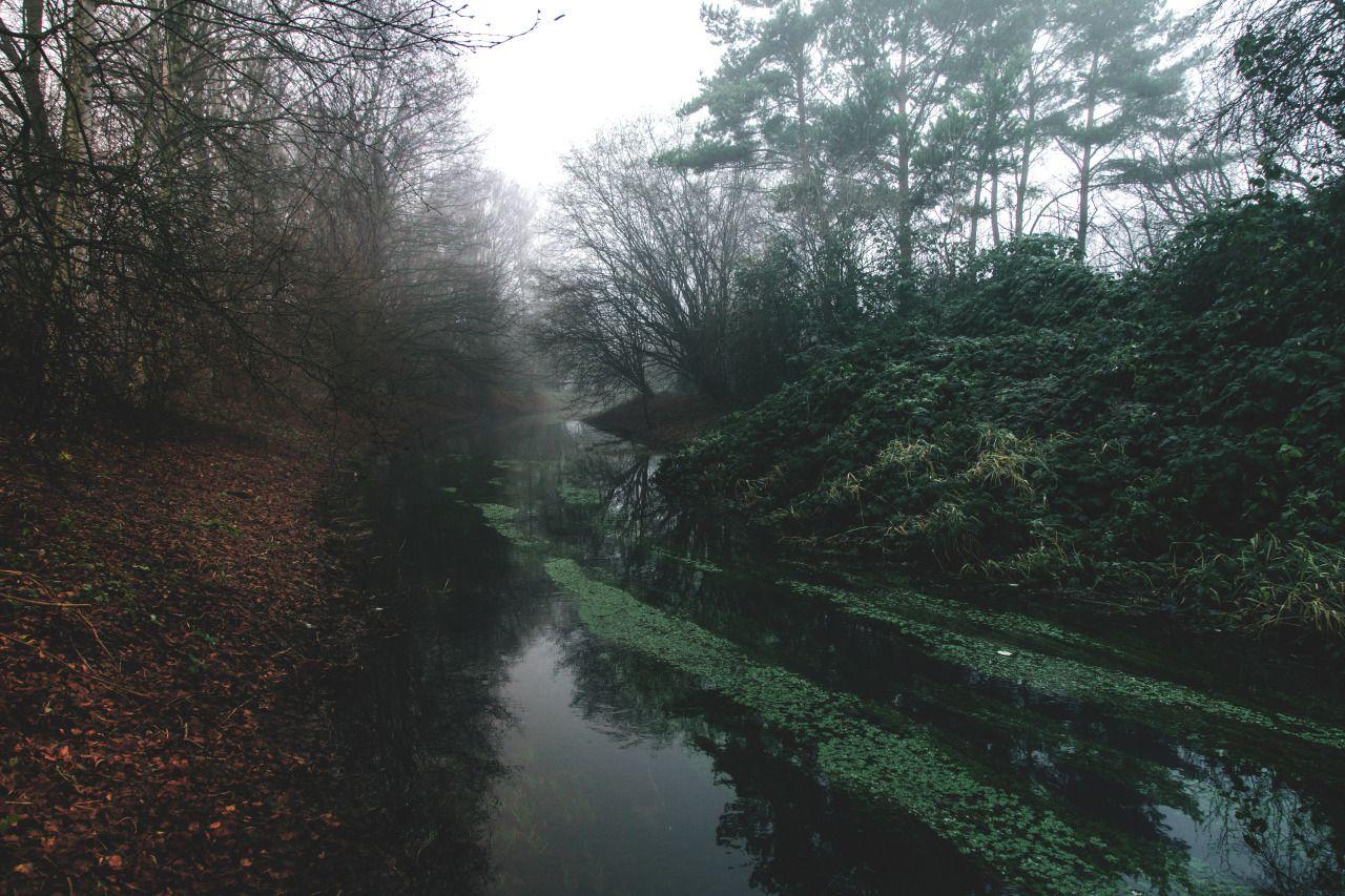 Hazy by Denny Bitte - #artists #autumn #bitte #creek #denny #fog #forest #landscape #nature #on #original #photographers #photography #tumblr