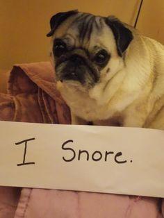 Said Every Pug Ever Snoring Humor Pug Names Pugs Pug Love