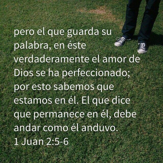 1 Juan 2 5 6