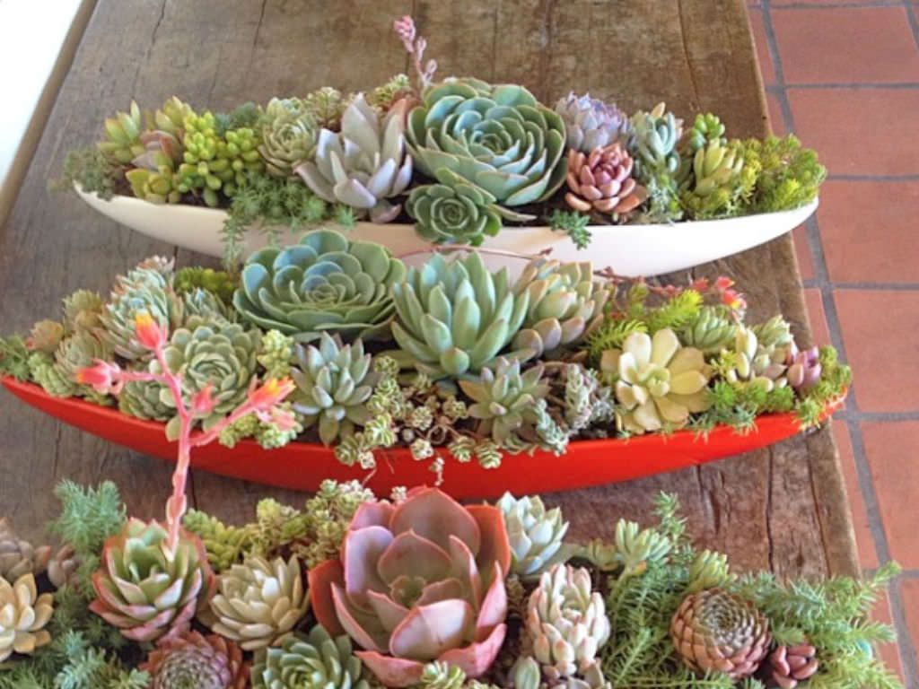 5 Easy Care Mini Succulent Garden Ideas Potted Up As Patio Accents Or Living Centerpieces Succulents In Containers Can Enhance Your Es Inside
