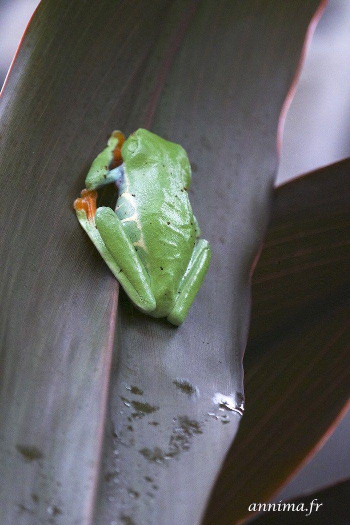Le jour où on a compris que les visites étaient chères au Costa Rica: La Paz Waterfall Garden. - annima.fr