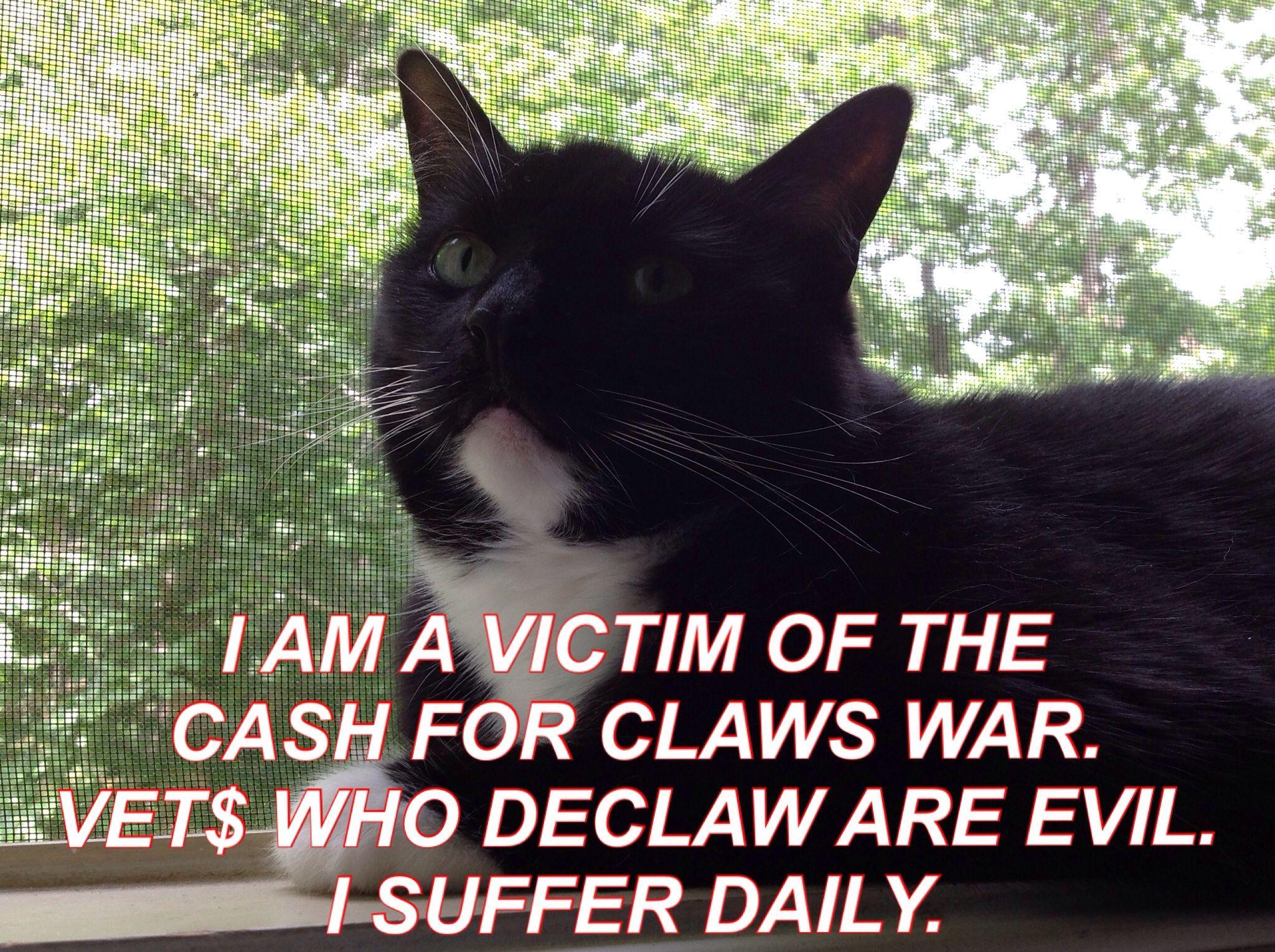 Vet Who Declaw Are Evil Vet Med Pet Care