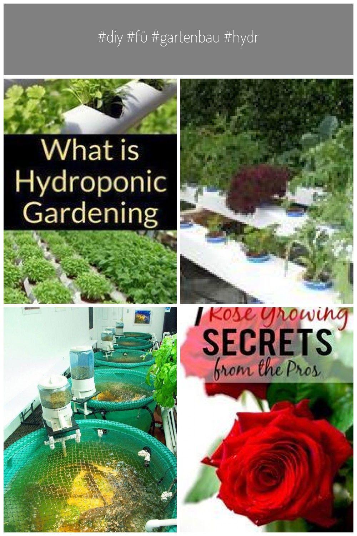 Diy F Gartenbau Hydrokultur Hydroponik Hydroponischer Ist Was Ist Hydroponischer Gartenbau Hydrokultur Diy Hydroponik Hydrokul Hydrokultur Gartenbau Hydroponik