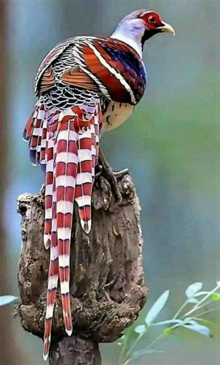 Mehmet Celal Otkun adlı kullanıcının Kuşlar panosundaki