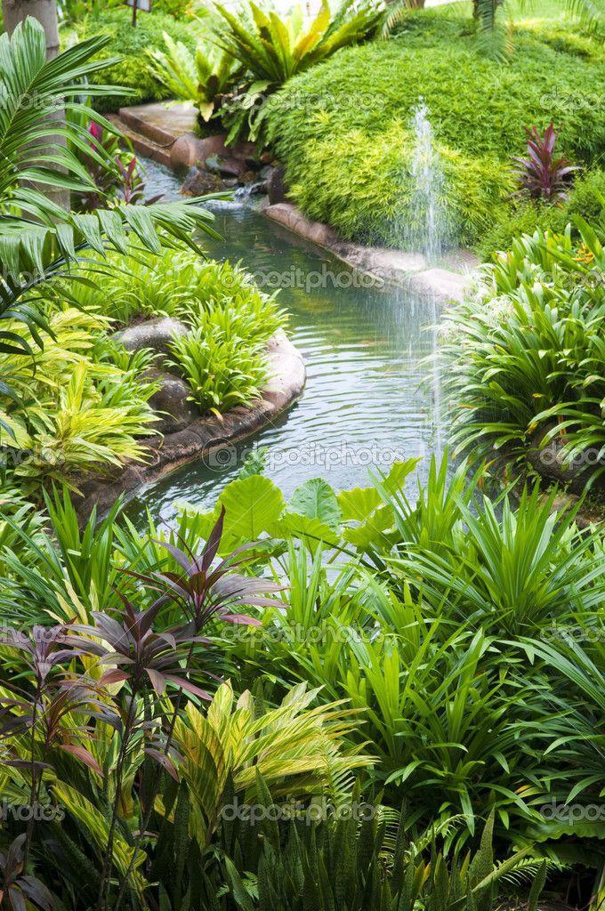 tropical garden  u2026