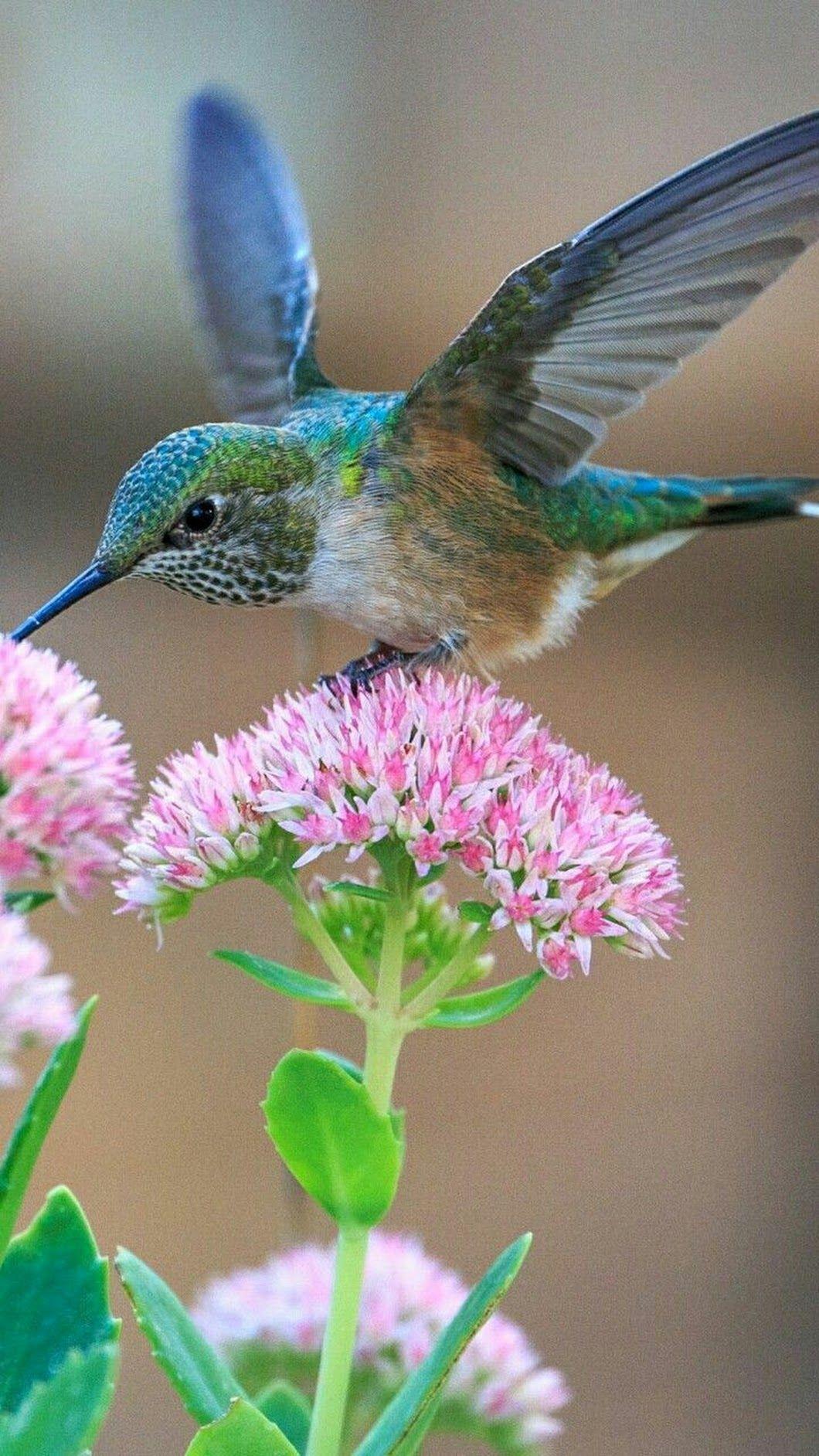 Lindo colibrí azul. | ¡Que belleza de pájaros! | Pinterest | Colibri ...