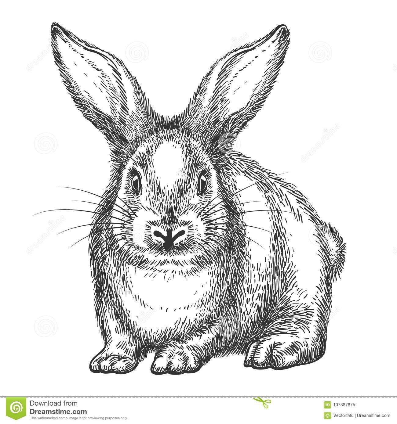 Pin En R Rabbits Rabbits Rabbits Sketches Drawings Watercolor