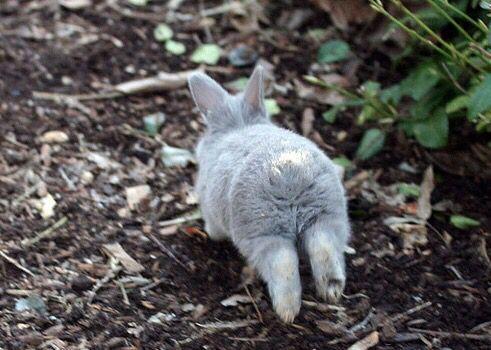 Busy bunny butt