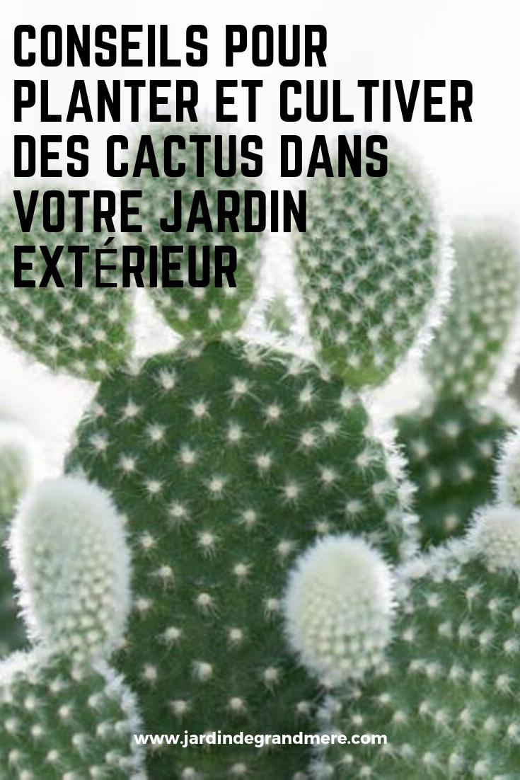 Conseils pour planter et cultiver des cactus dans votre ...